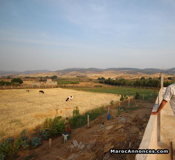 terrain agricole a vendre khemisset